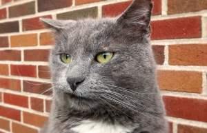 cat-stress-2.jpg