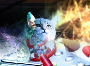 cat-veterinary-medicine-182825.jpg