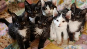 couple-hoarding-cats-shelters-rescues-1.jpg