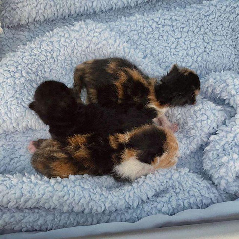 tiny newborn kittens