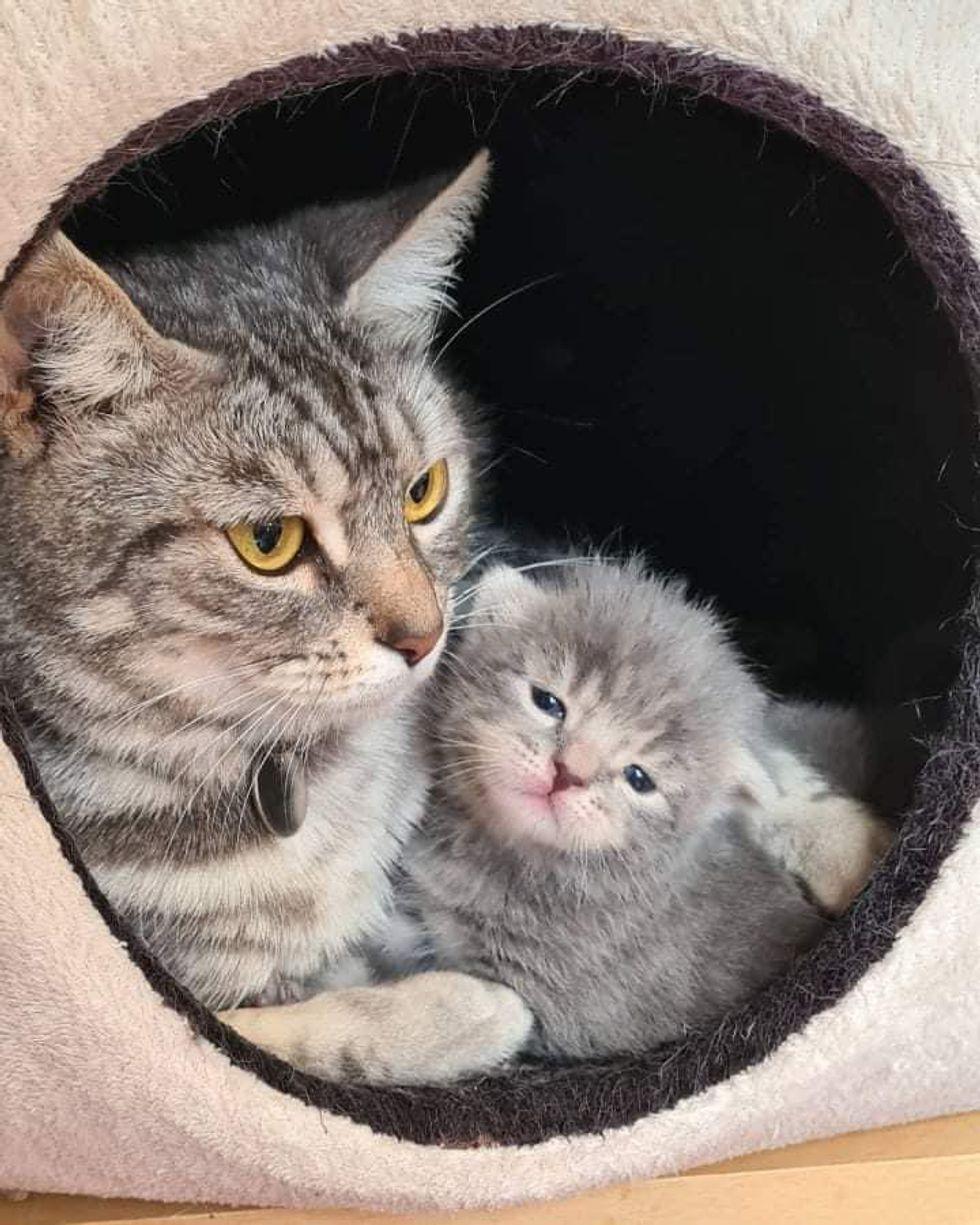 loving cat mom