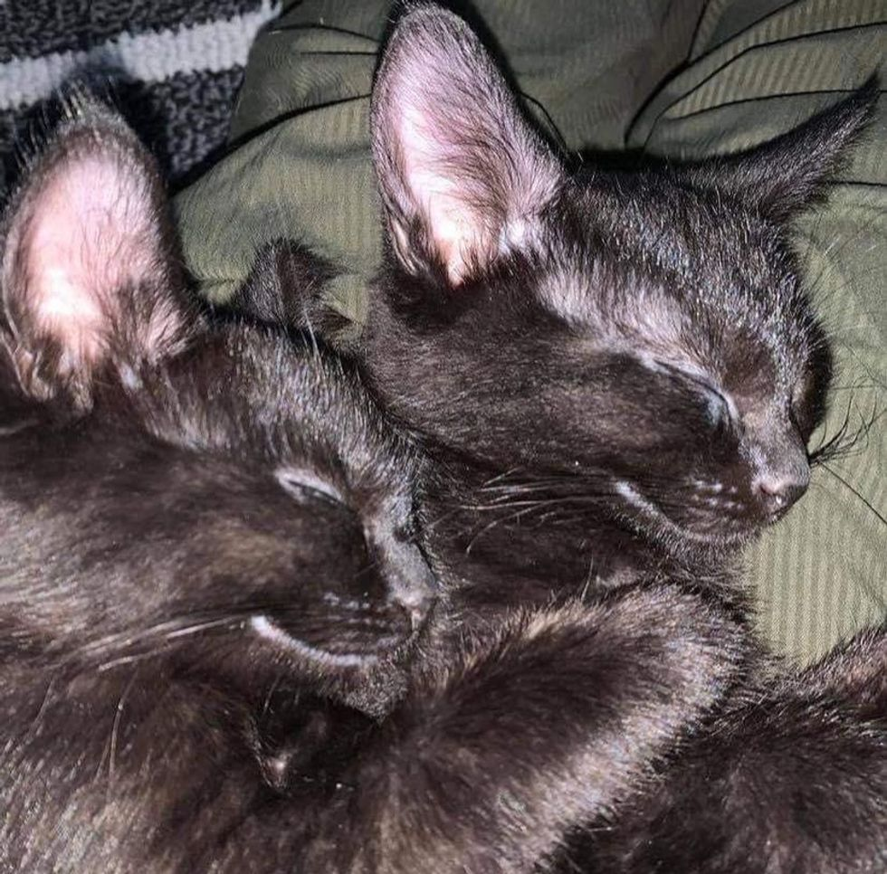 Kittens Find Their Happily Ever After Together After Leaving Life as Feral Cats