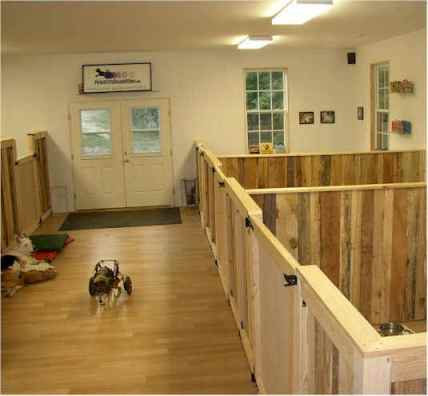 Pets with disabilities barn