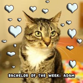 Adam: Sweet, Lovable, Incontinent, Cuddly
