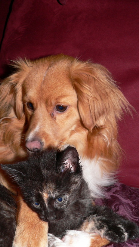 Doodle being loving with all creatures, especially Mrs. P as a kitten