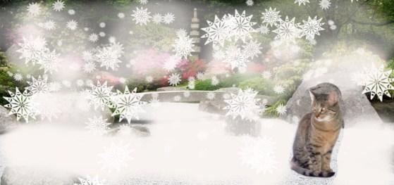 My zen-like aura keeps me warm while I contemplate haiku in my garden.