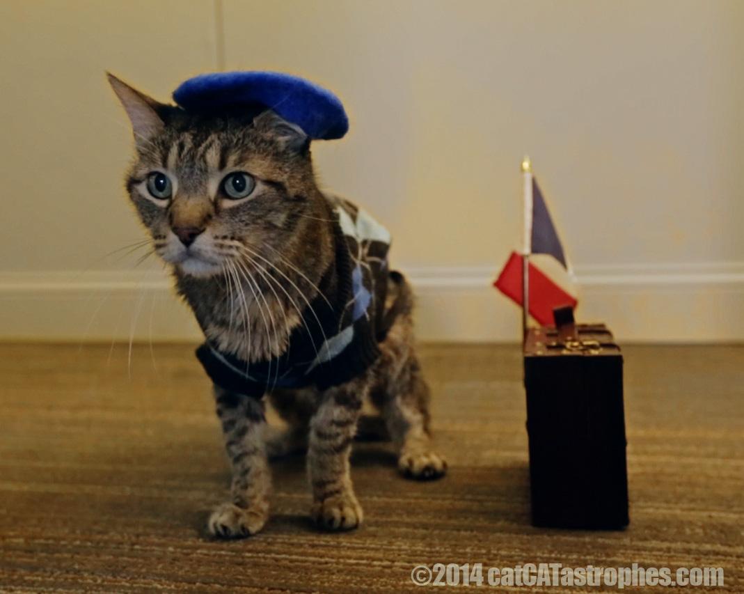 guy lafurrr | Cat In The Fridge