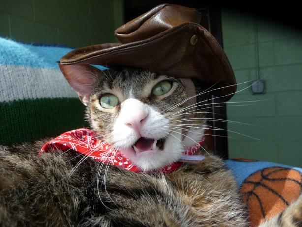 """Half Pint in his """"cowboy"""" series."""