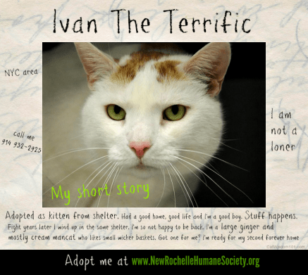 He's terrific, obviously. (graphic c/o Layla Morgan Wilde at Catwisdom101.com)