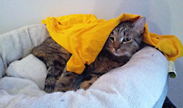 crepes tshirt tent fail