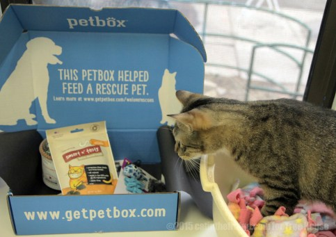 Whitman, a sassy tabby with the heart of a prankster and a touch of incontinence, is the first to check out the box.