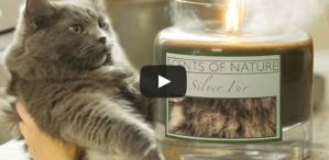 CATastrophes Cat Web Series Candles