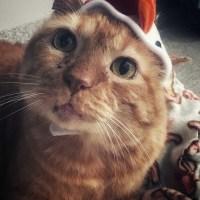 Cat Vows To Wear Chicken Hat* - Meet Leonardo Pescatore #ChickenHatProtest