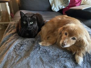 dog and cat on a pawtect waterproof blanket