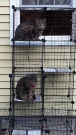 cjet-catio-and-cat-pics
