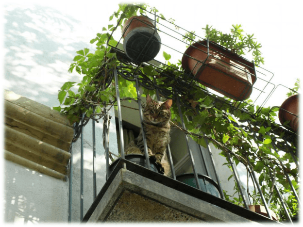 Balcony Catios The Purrfect Solution