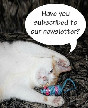 Subscribe to our newletter