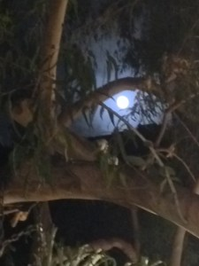 Sawdust Full Moon