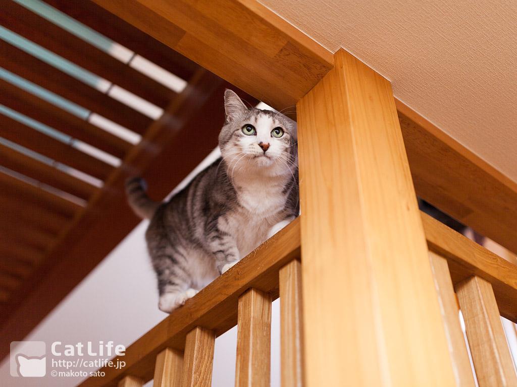 CatLife猫写真壁紙 2013年12月