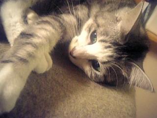 image/catlife-2005-10-17T01:28:50-1.jpg