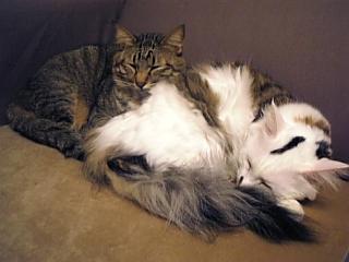 image/catlife-2005-11-02T01:29:34-1.jpg