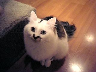 image/catlife-2006-02-02T22:50:37-1.jpg