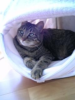 image/catlife-2006-03-15T10:06:56-1.jpg