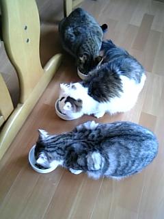 image/catlife-2006-04-12T15:35:12-1.jpg