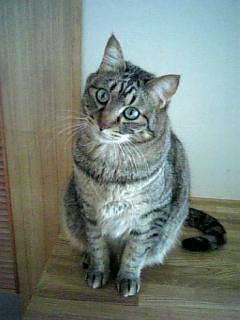 image/catlife-2006-04-17T13:11:04-1.jpg