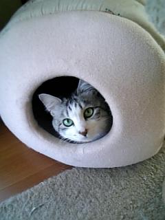 image/catlife-2006-04-20T13:00:18-1.jpg