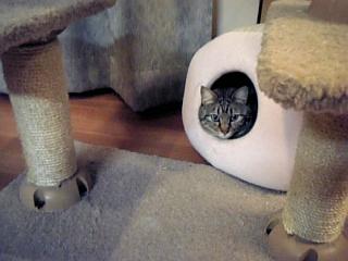 image/catlife-2006-04-21T20:16:41-1.jpg
