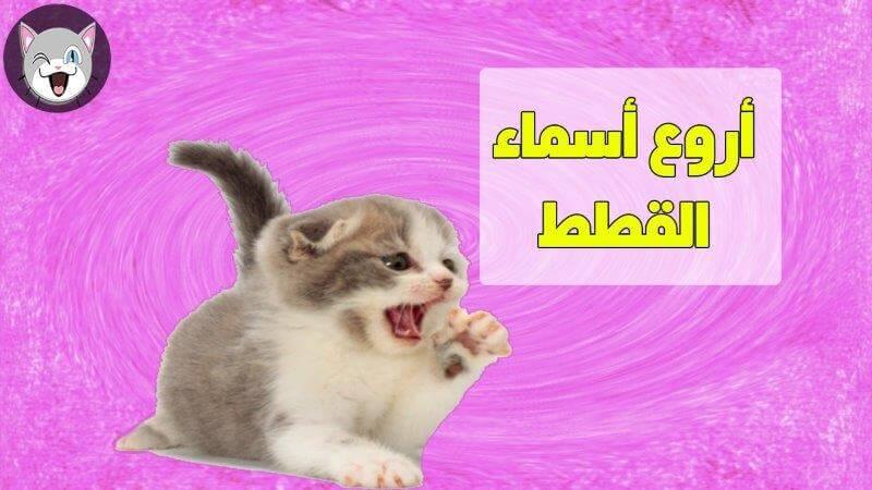 اسماء قطط جميلة للذكور و للإناث و تحفظها القطط بسرعة عشاق