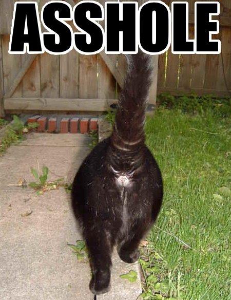 asshole_lol_cat_macro