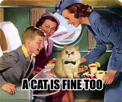 cat fine too aeroplane retro cat macro