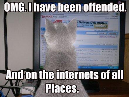 cat looking at computer monitor
