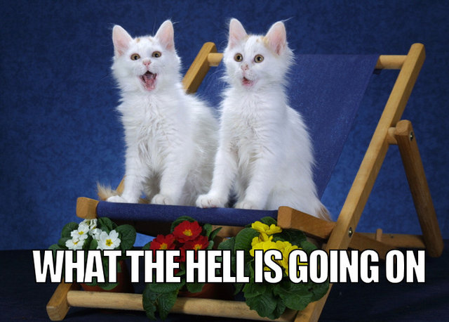omg wtf what the hell is happening going on kittens lol cat macro
