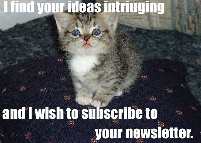 subscribe newsletter intriguing ideas kitten lol cat macro