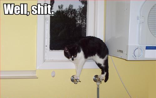 bathroom taps faucet dilemma precarious balance lol cat macro