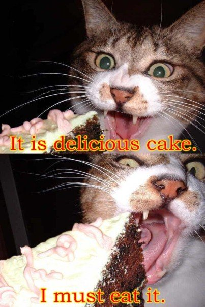 It Is Delicious Cake CAT MACROS