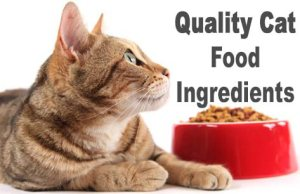 Quality Cat Food Ingredients : What to Look For