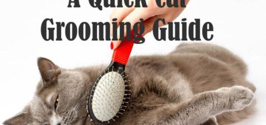 Cat Grooming   Cat Mania