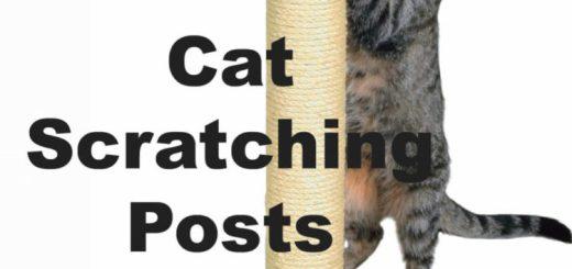 Cat Scratching Posts : Do Cat's Need Them?   Cat Mania