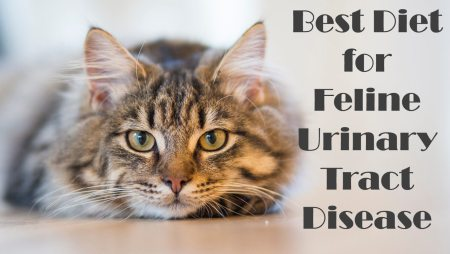 Best Diet for Feline Urinary Tract Disease | Cat Mania