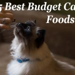 5 Best Budget Cat Foods : Low Cost but Quality | Cat Mania