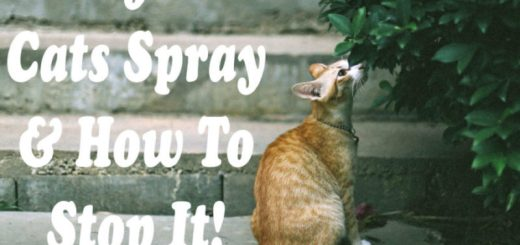 Why Do Cats Spray : How to Stop It ! | Cat Mania | For Cat Lovers !