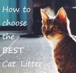 Choosing the Best Cat Litter : Comparison Review