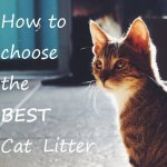 Choosing the Best Cat Litter : Comparison Review