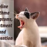 Feline Asthma Symptoms, Treatment and Prevention