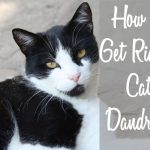 How to Get Rid of Cat Dandruff | Cat Mania | For Cat Lovers