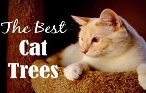 10 Best Cat Trees